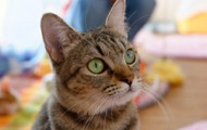 猫カフェ_アイキャッチ用