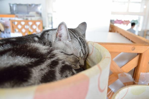 寝てるネコ2